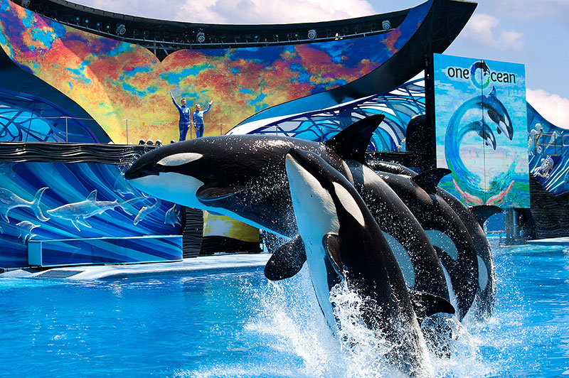 SeaWorld San Diego Free For US Military Veterans